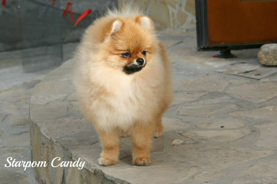 candy (4)