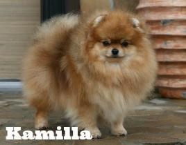 Pomfavorit Kamilla