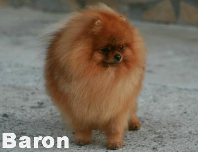 Pomfavorit Baron